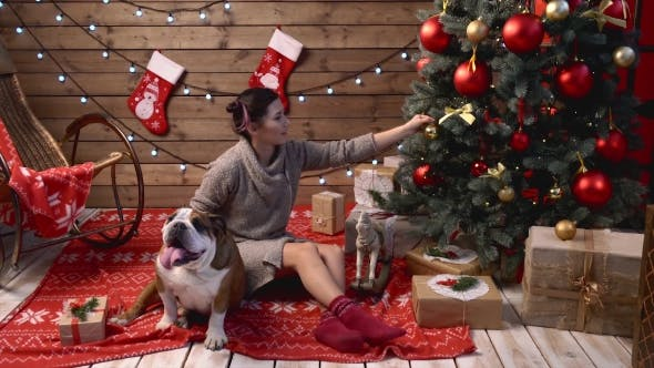 Thumbnail for A Girl Playing With English Bulldog Under Fir-tree
