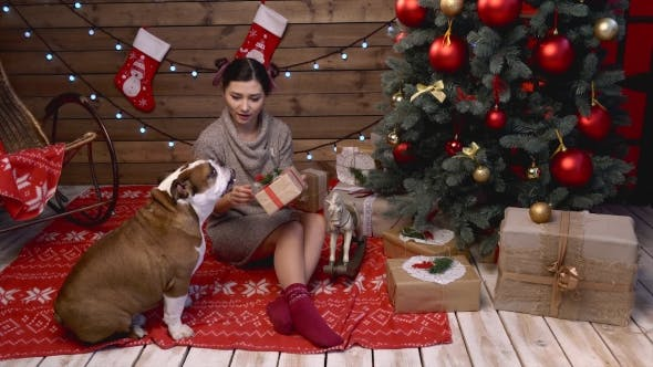 Thumbnail for A Girl Presenting a Xmas Gift To Her Bulldog