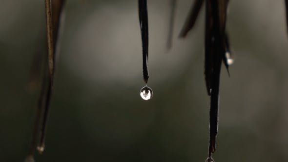 Thumbnail for Water Drops