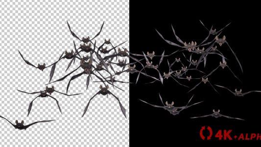 Thumbnail for Bat Swarm - Flying Loop - Front Screen - II - 4K