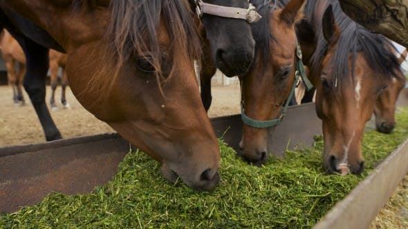 Thumbnail for Curious Young Horses At An Enclosure