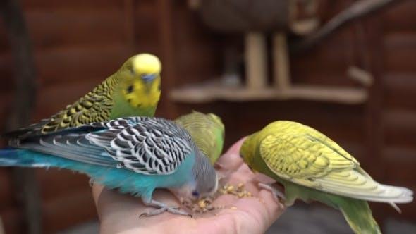 Thumbnail for Mère Et Enfant Dans La Petting Zoo