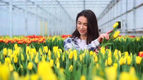 Young Woman Works with Tulips in a Greenhouse