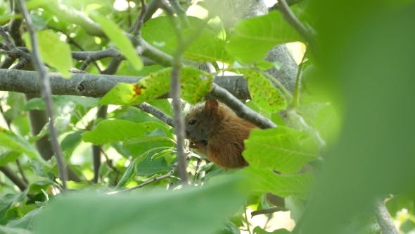 Thumbnail for Squirrel Sitting On A Branch