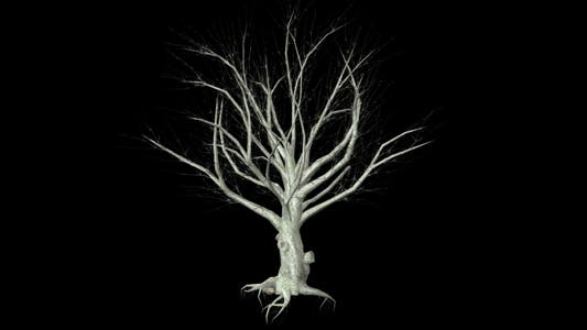 Dead dry Tree