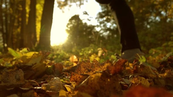 Thumbnail for Defocused Girl Running On Fallen Autumn Leaves In Sunny Forest
