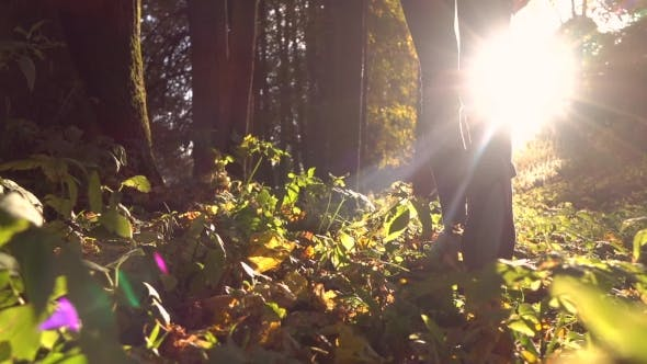Thumbnail for Girl In Sneakers Walks On Fallen Autumn Leaves In The Forest Against Blazing Sun.