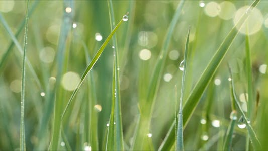 Thumbnail for Dew Drops On Green Grass Shot With Slider