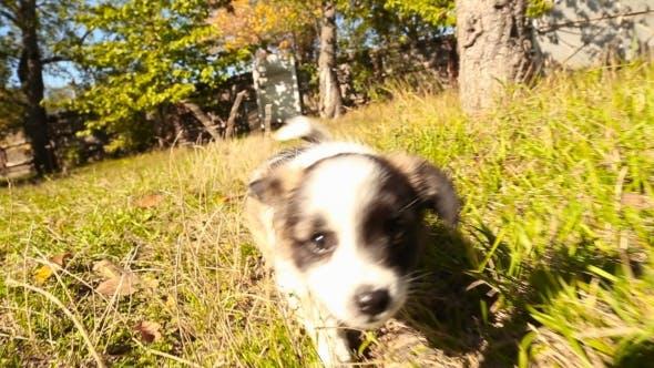 Thumbnail for Little Fluffy Dog