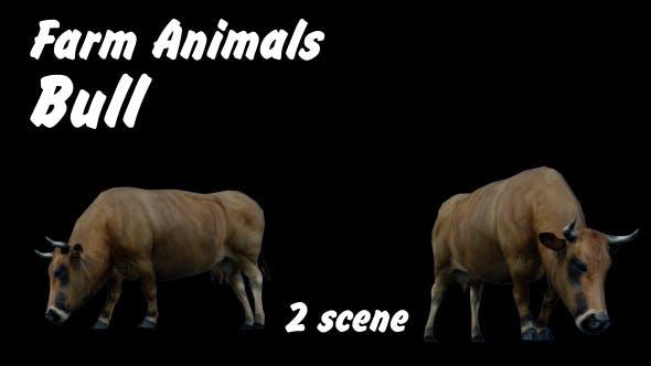 Thumbnail for Farm Animals - Bull - 2 Scene