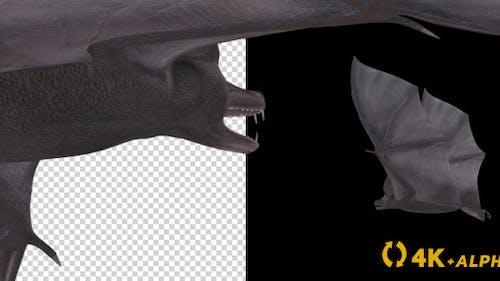 Vampire Bat - Flying Cycle - Back Angle - 4K