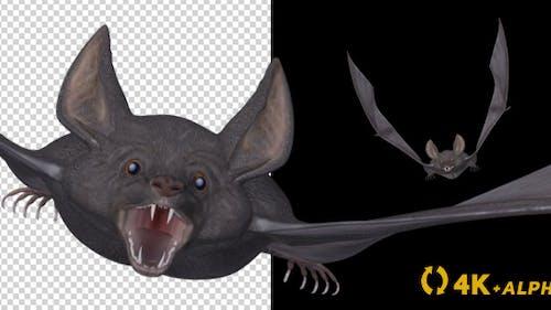Vampire Bat - Flying Cycle - Front Angle - 4K