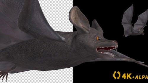Vampire Bat - Flying Cycle - Side Angle - 4K