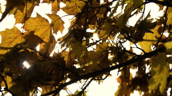 Thumbnail for Autumn Landscape With Trees And Leaves.