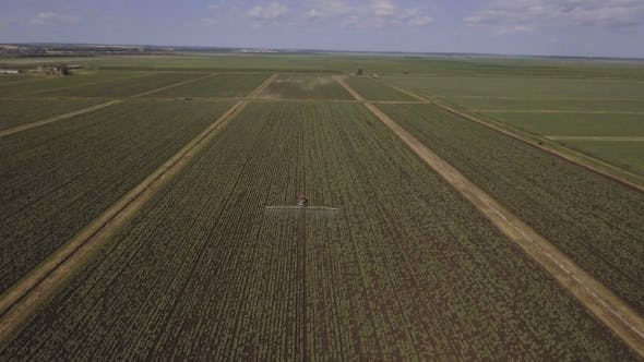Thumbnail for Tractor Is Spraying Fertilizers Potato field.Aerial Video.