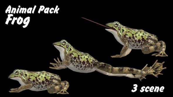 Thumbnail for Animal Pack - Frog - 3 Scene