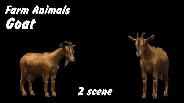 Thumbnail for Farm Animals - Goat - 2 Scene