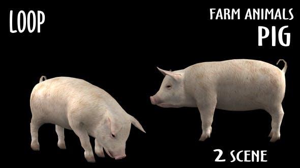 Thumbnail for Farm Animals - Pig - 2 Scene