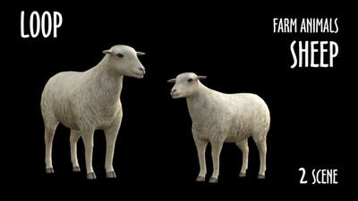 Farm Animals - Sheep - 2 Scene