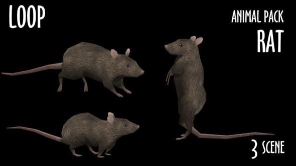 Thumbnail for Animal Pack - Rat - 3 Scene