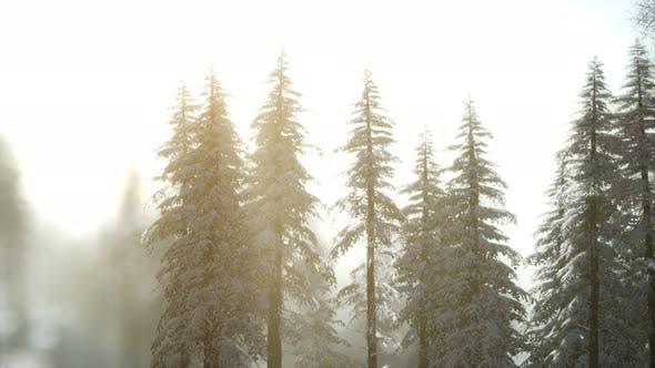 Thumbnail for Splendid Christmas Scene in the Mountain Forest