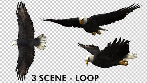 Eagle - 3 View Scene Pack