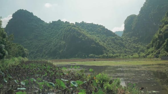 Thumbnail for Cemetery In Water Among The Green Islets, Vietnam