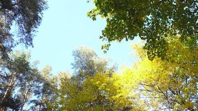 Bright Autumn Forest. Autumn