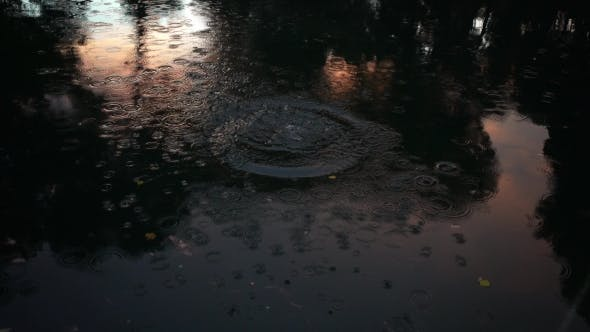 Thumbnail for Circles On Water In Park Pond