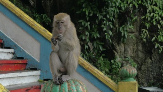 Cover Image for At Batu Caves, Malaysia Man Give To Monkey Food And She Is Sitting On Railing And Eating