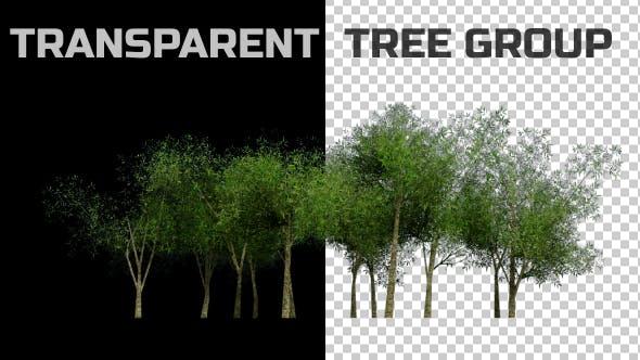Tree Group Animation