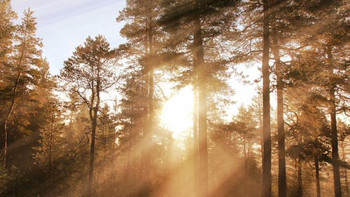 Morning Forest Background