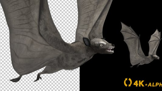 Thumbnail for Super Bat - Flying Cycle - Side Angle - 4K