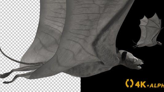 Thumbnail for Super Bat - Flying Loop - Back Angle - 4K