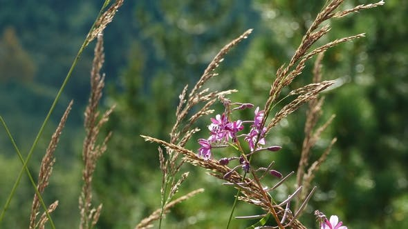 Thumbnail for Beautiful Mountain Flower