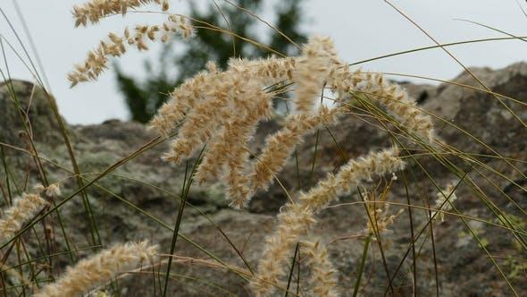 Thumbnail for Beautiful Mountain Flowers 3