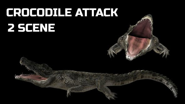Thumbnail for Crocodile - Alligator Attack - 2 Scene