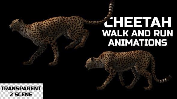 Thumbnail for Cheetah Run And Walk Animations - 2 Scene
