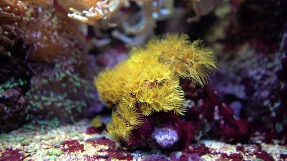 Exotic Marine Coral