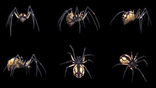Spooky Spider - Black Yellow - Walk Loop - Pack of 6
