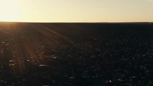 Dramatic Drone Flight Along Dark Agricultural Field in the Morning with Low Sun Warm Light