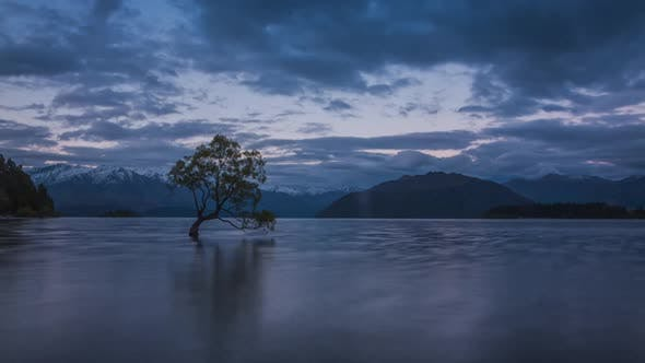 New Zealand Wanaka tree timelapse