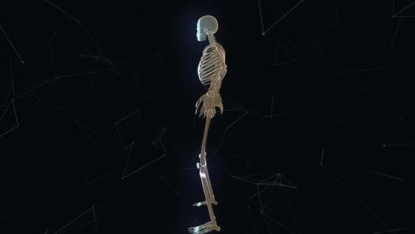 Man Skeleton System V1 4k