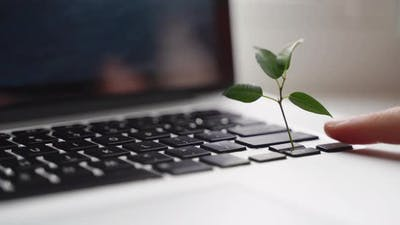 Laptop Keyboard with Plant Growing on It
