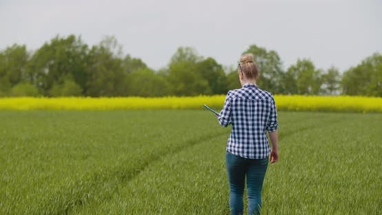 Cover Image for Agriculture Female Farmer Examining Young Wheat Field