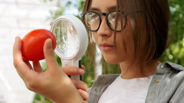 Thumbnail for Female Farmer Woman Checking and Inspecting Quality of Plants of Organic Tomatoes in Garden Field