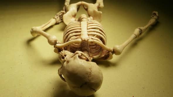Miniature Skeleton Model