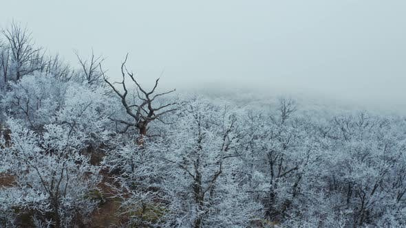 Thumbnail for Natural view of white forest in winter