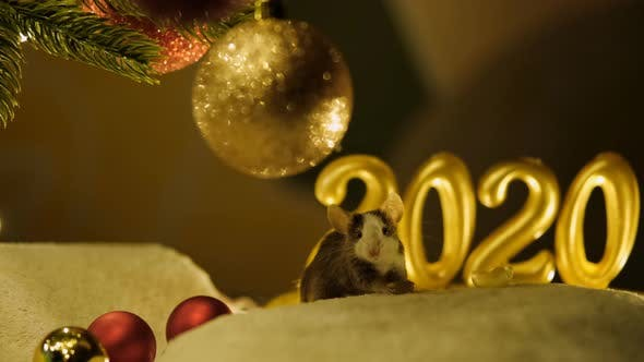Thumbnail for Gray Rat Eats Sitting Under a Christmas Tree on The Background of The Scenery of The New Year 2020.