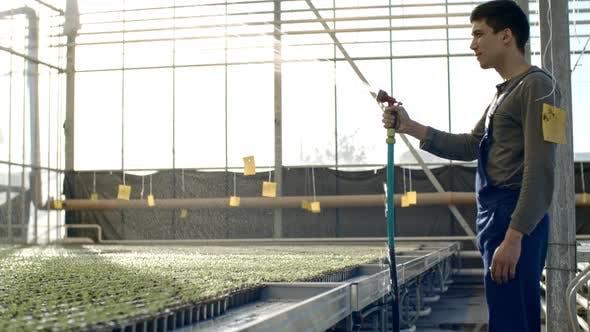 Thumbnail for Male Worker Watering Seedlings in Greenhouse
